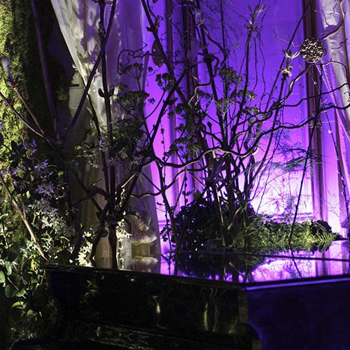 Scénographie végétale Cacharel Marianne Guedin
