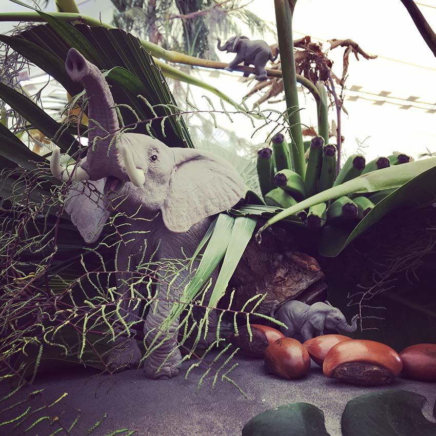 Scénographie végétale Jungle Marianne Guedin