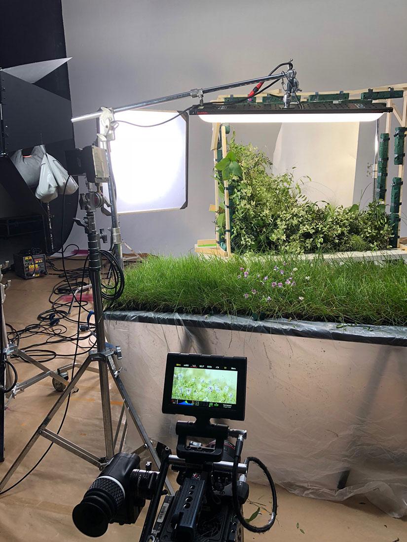 Scénographie végétale PUB Weleda Marianne Guedin